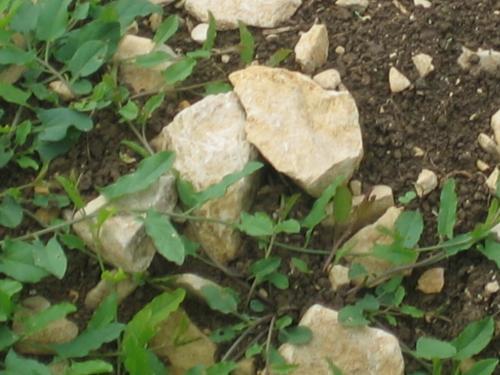 Acker Steine